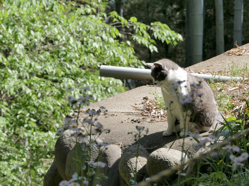 崖下を睨んでる猫2