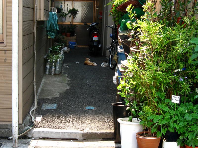 別の奥まった玄関先の猫たち1