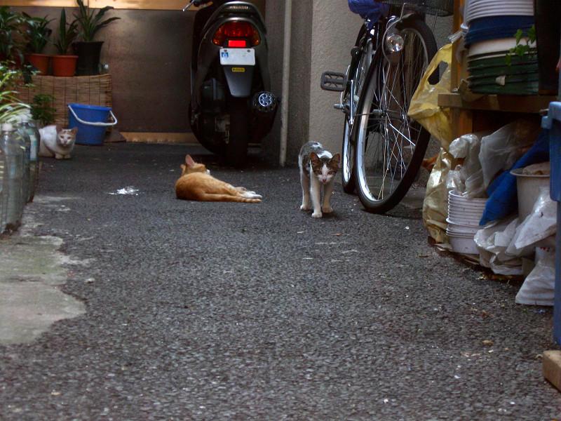 別の奥まった玄関先の猫たち2