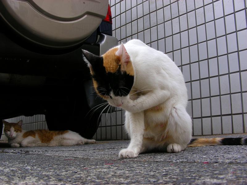 壁タイルと三毛猫3
