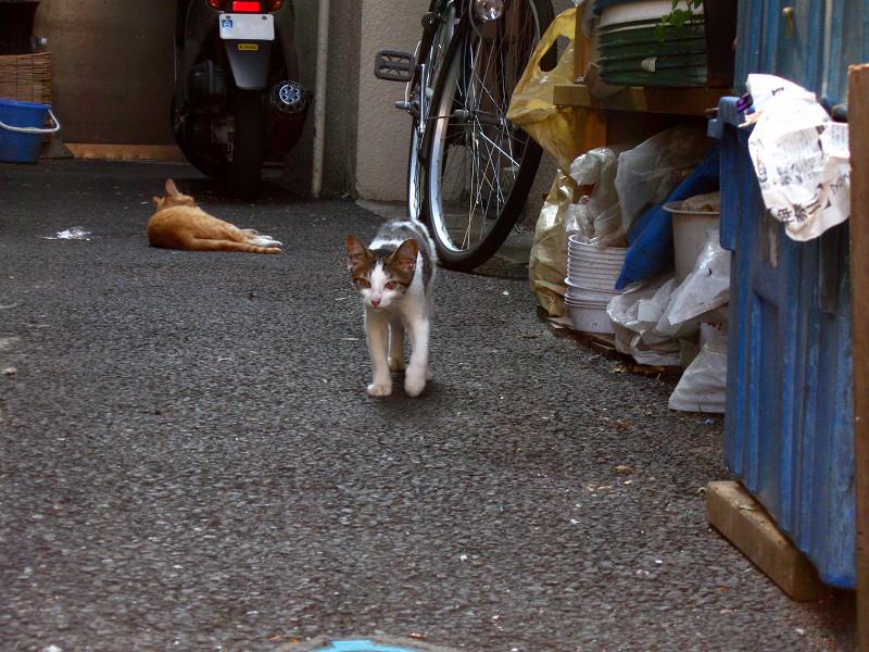 別の奥まった玄関先の猫たち3
