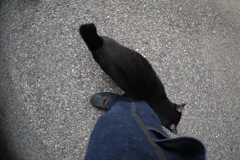 裾に体を擦り付ける黒猫1