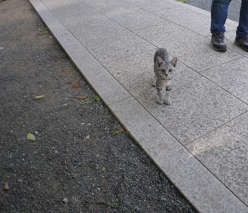 元気に境内を動くサバトラ仔猫1