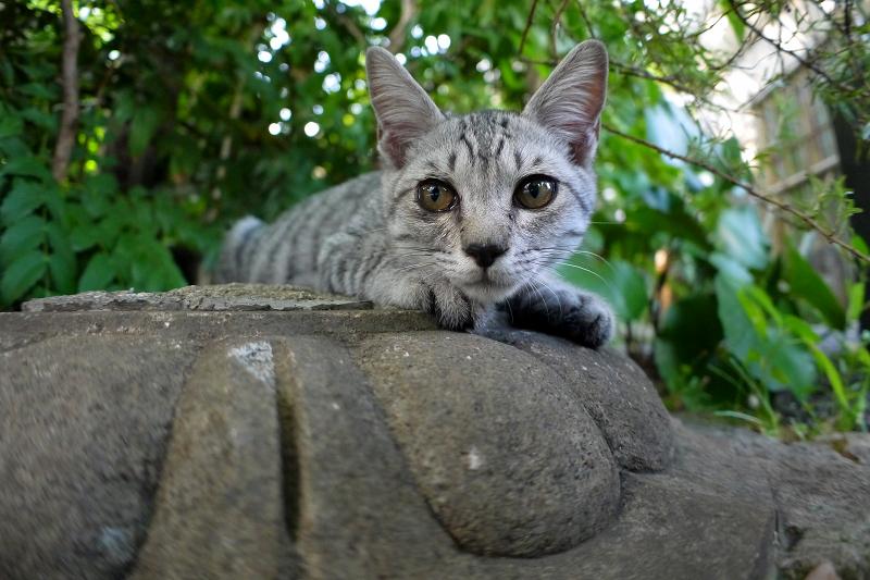 灯籠台座とサバトラ仔猫1