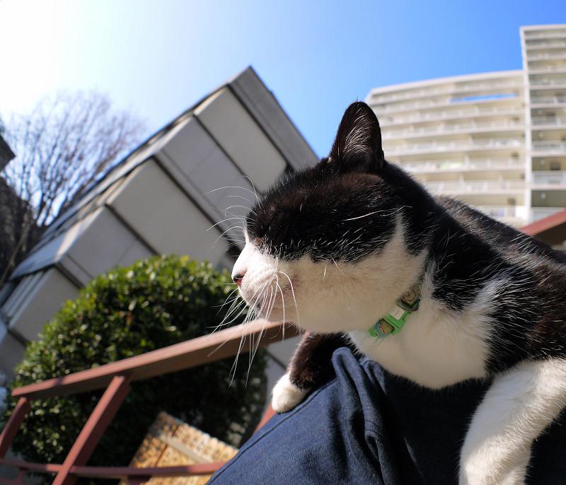 陽射しがタップリの黒白猫1