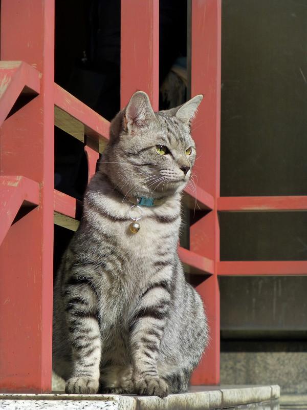 朱色手摺とサバトラ猫1