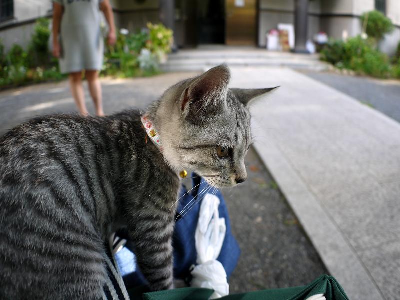 元気に境内を動くサバトラ仔猫2
