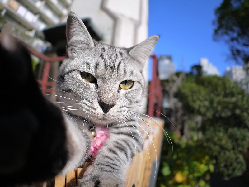 カメラで遊ぶサバトラ猫2