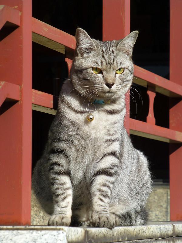 朱色手摺とサバトラ猫2