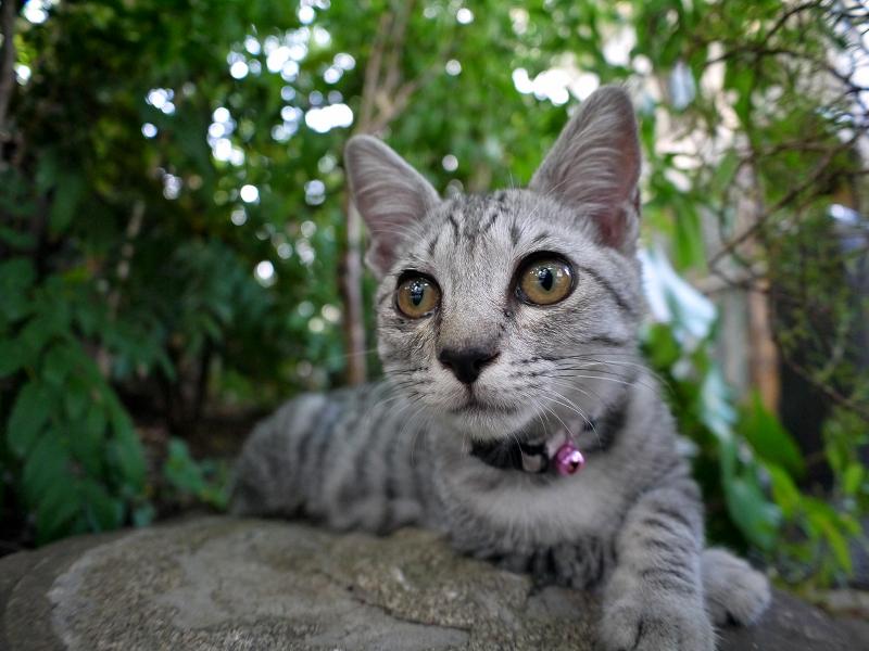 灯籠台座とサバトラ仔猫3
