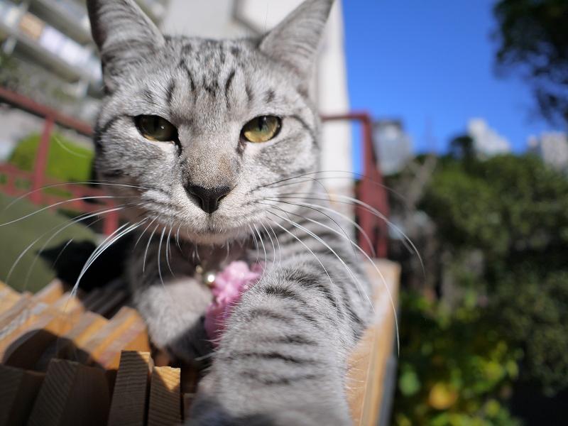 カメラで遊ぶサバトラ猫3