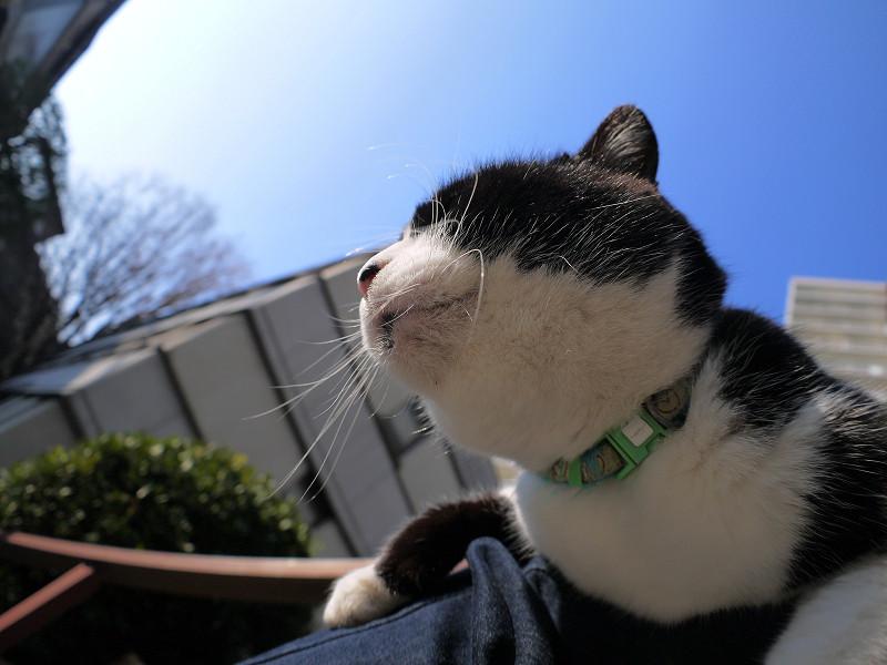 陽射しがタップリの黒白猫3