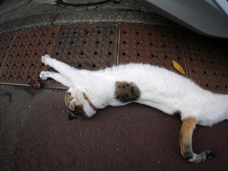 横になって伸びをする白三毛猫1