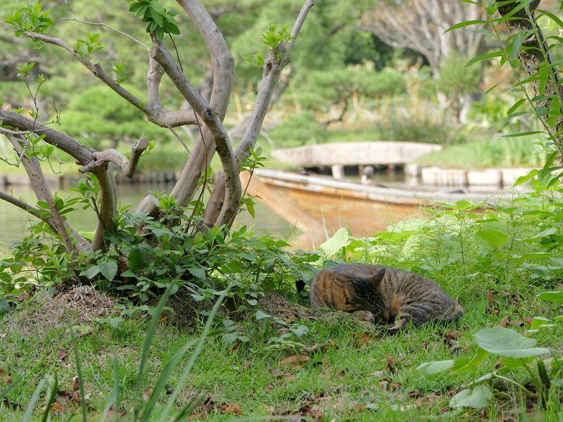 池の横で寝ているキジトラ猫