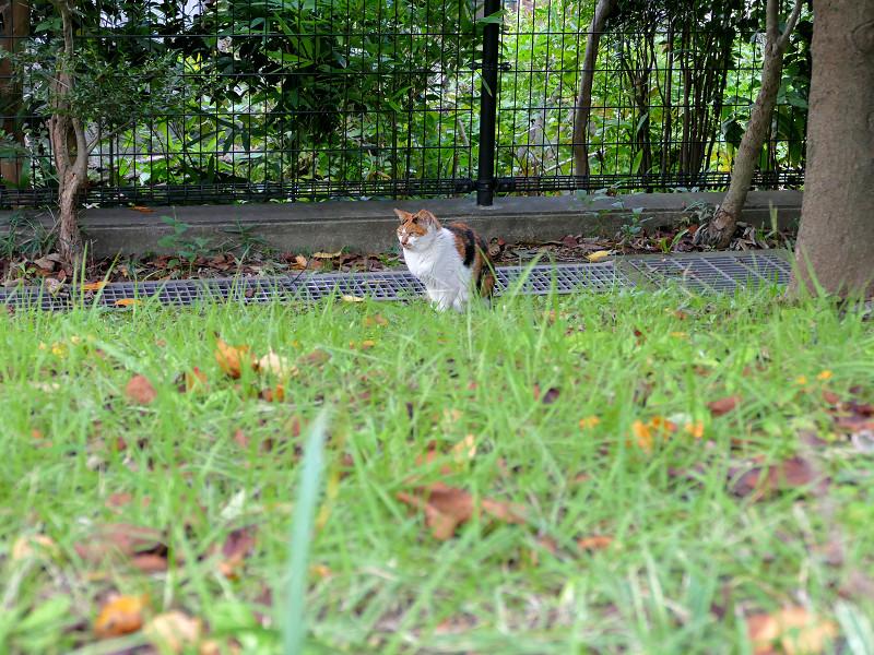 公園の端の猫1