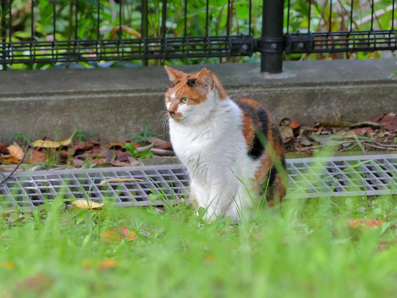 公園の端の猫2