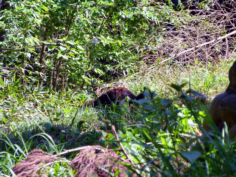 草むら毛長の黒猫2