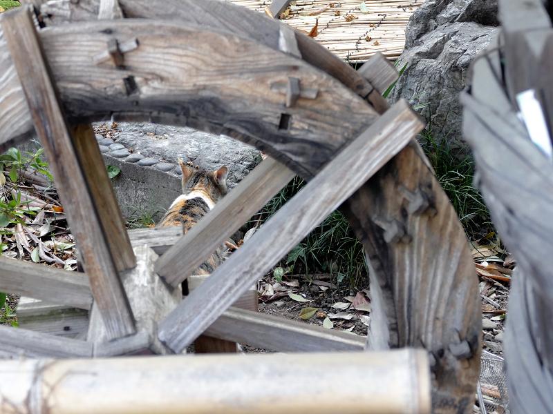山車の車輪と三毛猫1