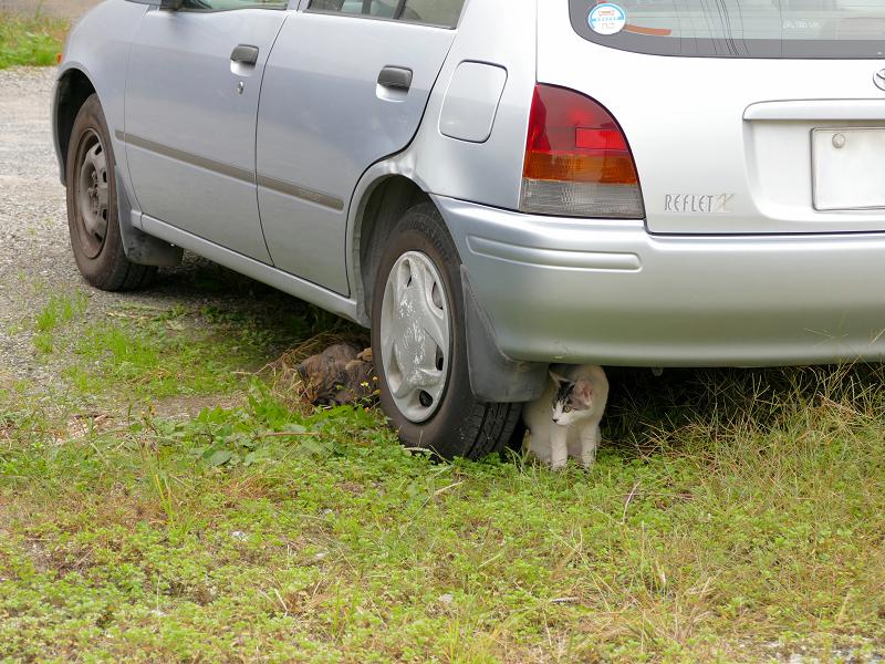 車の下の親子猫