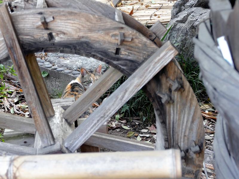 山車の車輪と三毛猫2