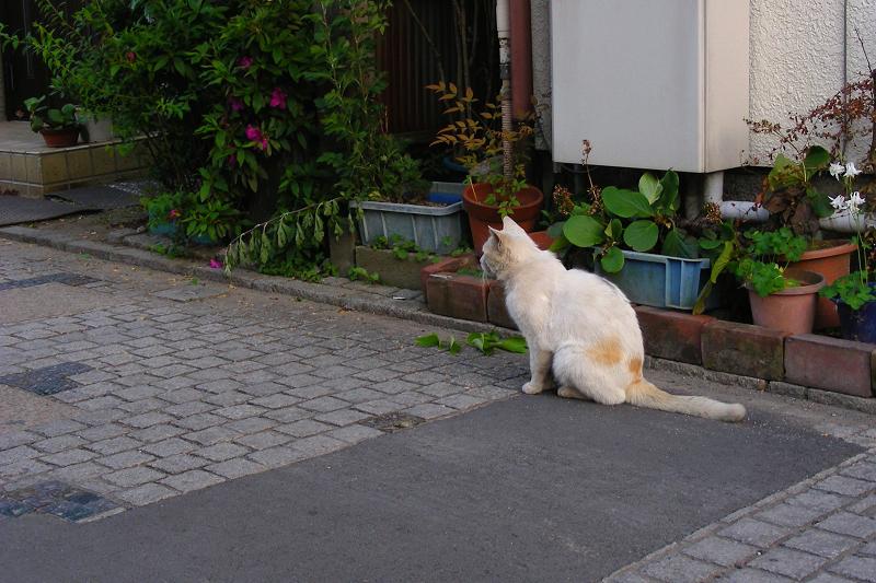街なか路地の猫1