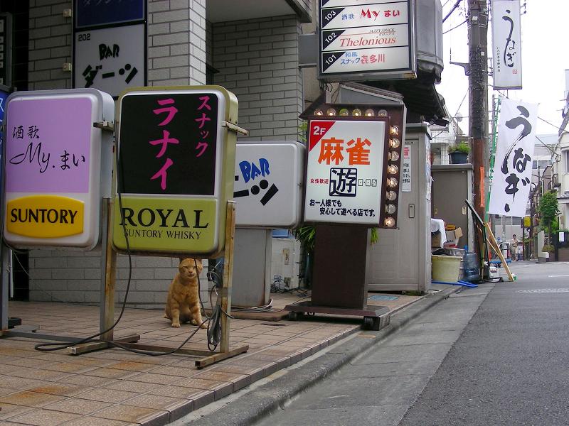 飲み屋街の茶トラ猫1