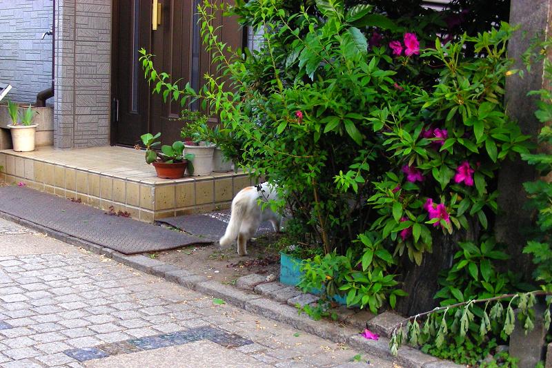 街なか路地の猫2