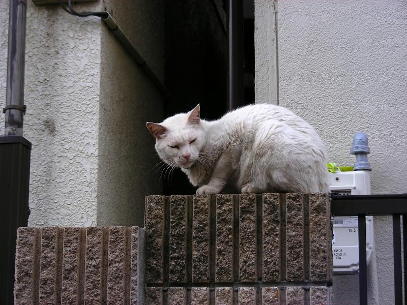 門扉の白猫2
