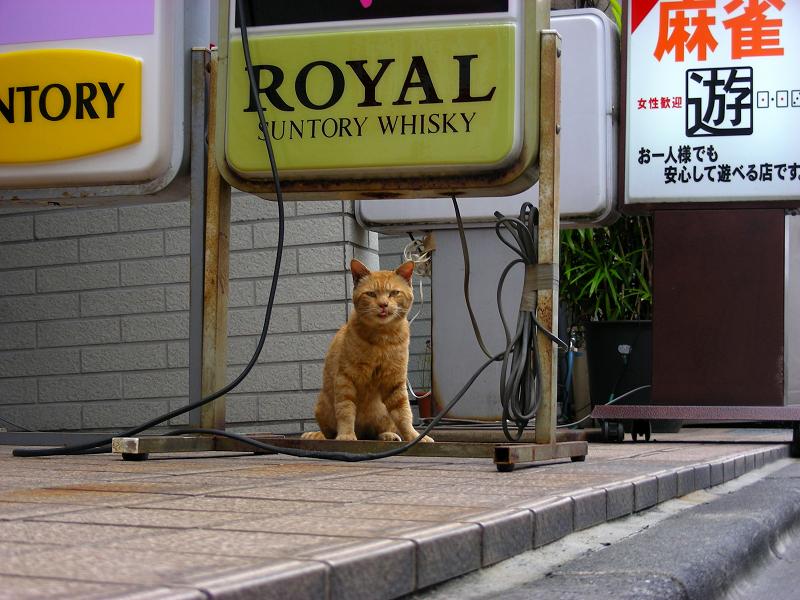 飲み屋街の茶トラ猫2