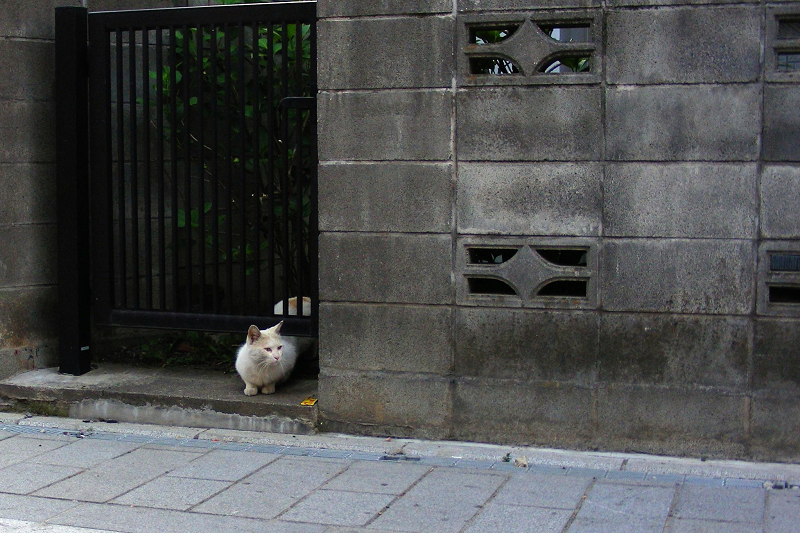 街なか路地の猫3