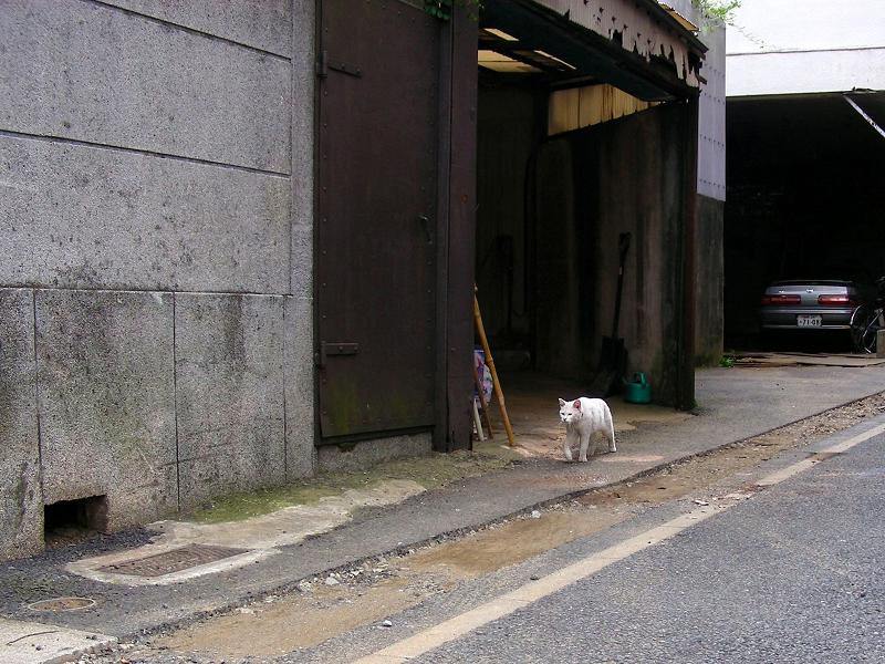 ガレージの白猫2匹3