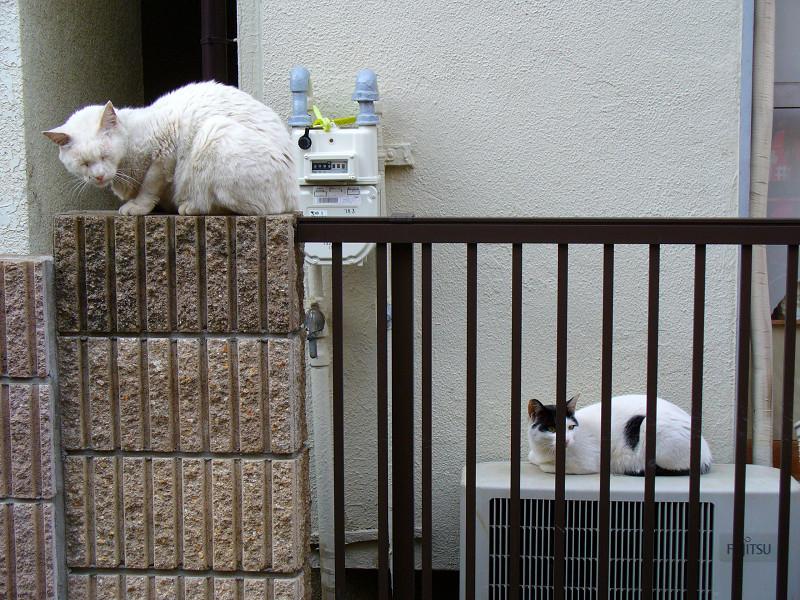 門扉の白猫と黒白猫1