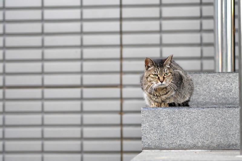 階段とタイルとキジトラ猫1