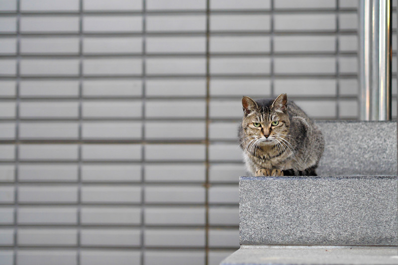 階段とタイルとキジトラ猫2