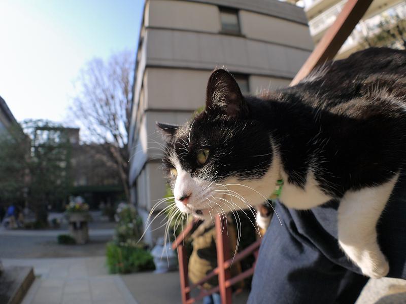 膝に乗ってる黒白猫の表情1
