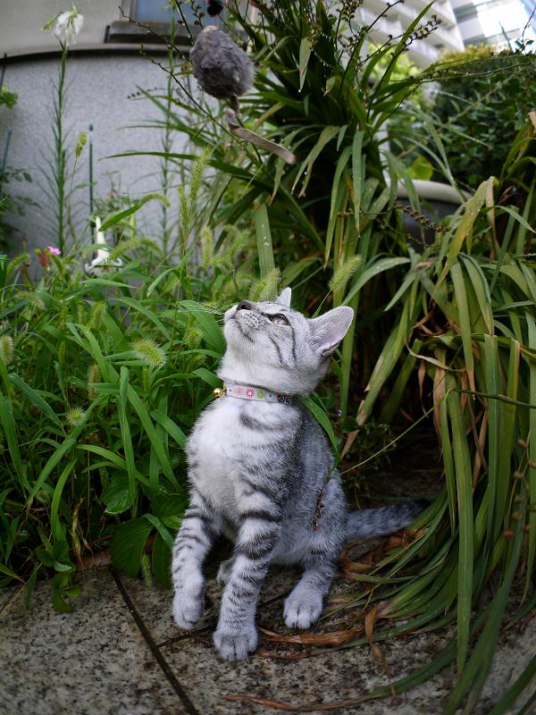 ネズミのオモチャで遊ぶサバトラ仔猫2