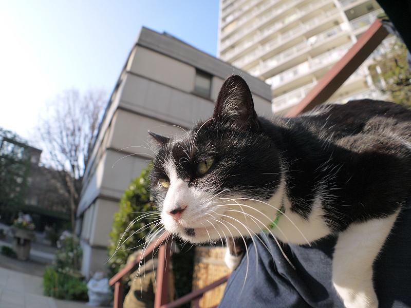 膝に乗ってる黒白猫の表情2