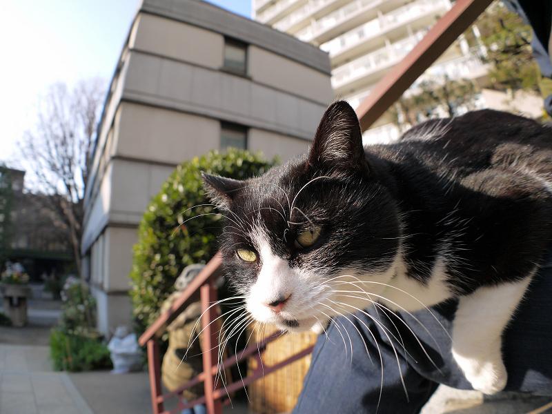 膝に乗ってる黒白猫の表情3
