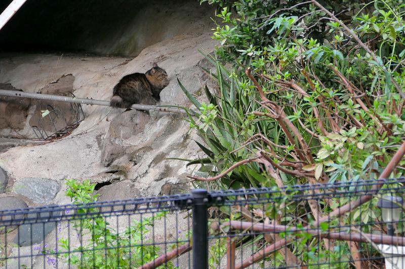 崖と毛が長い猫