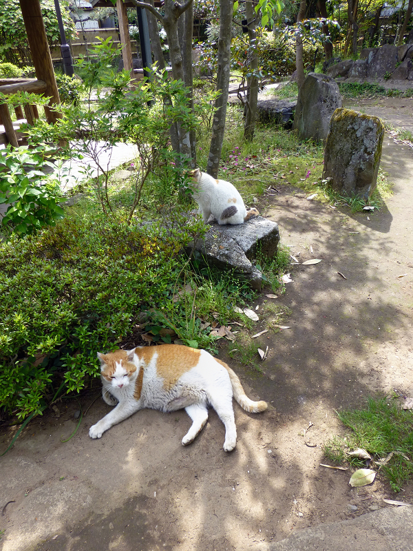 公園で寛ぐ猫たち1