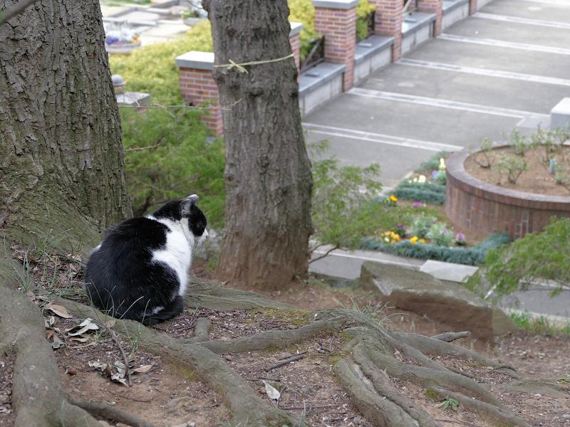公園を見ている黒白猫2
