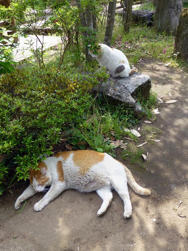 公園で寛ぐ猫たち2