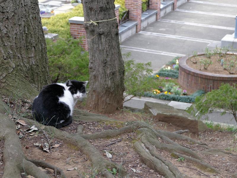 公園を見ている黒白猫3