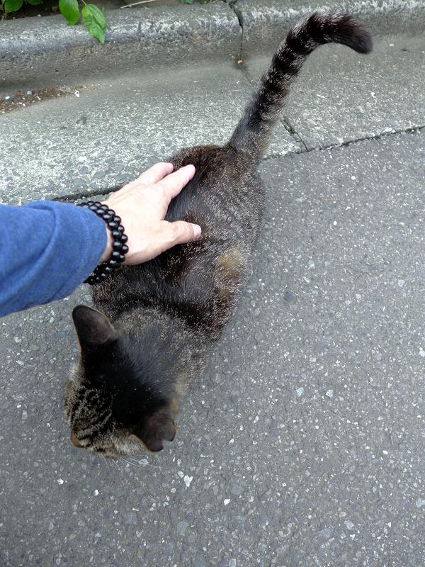 路地で出会ったキジトラ猫1