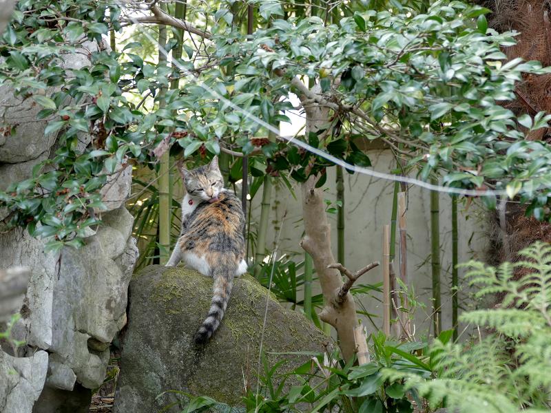 庭の岩の上の三毛猫1