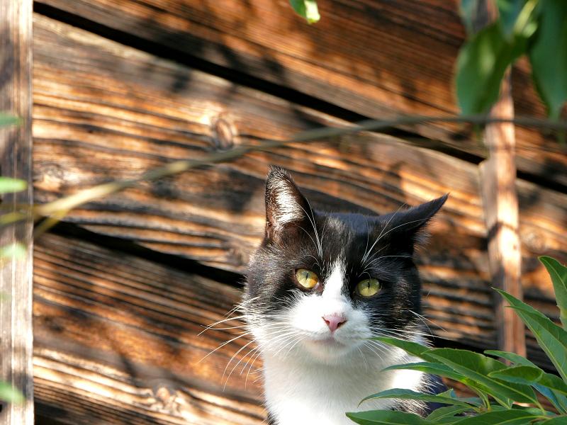 屋根上で固まる黒白猫1