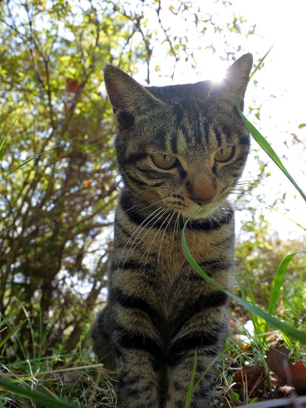 デジカメを見下ろすキジトラ猫3