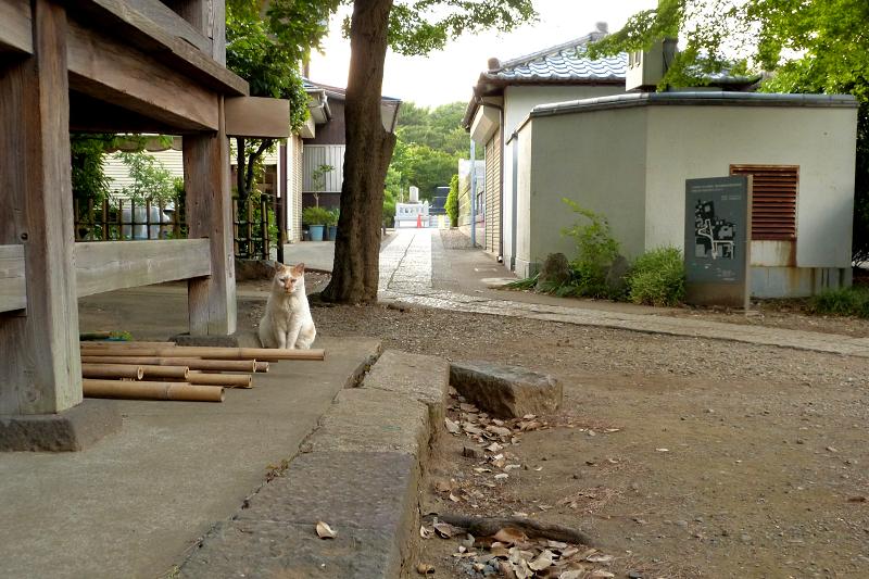 出て来た白茶猫1