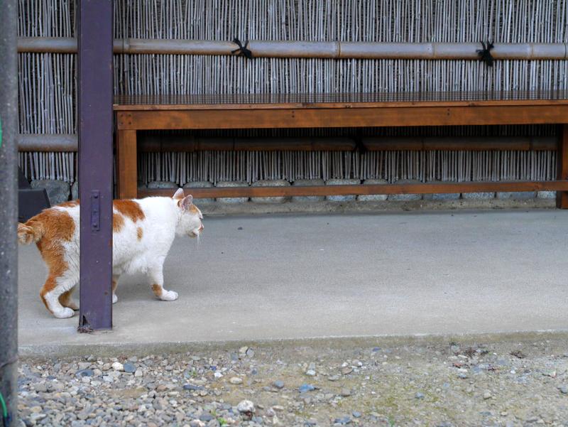 ベンチ近くの白茶猫1