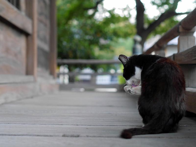 濡れ縁で毛づくろいしてる黒白猫1